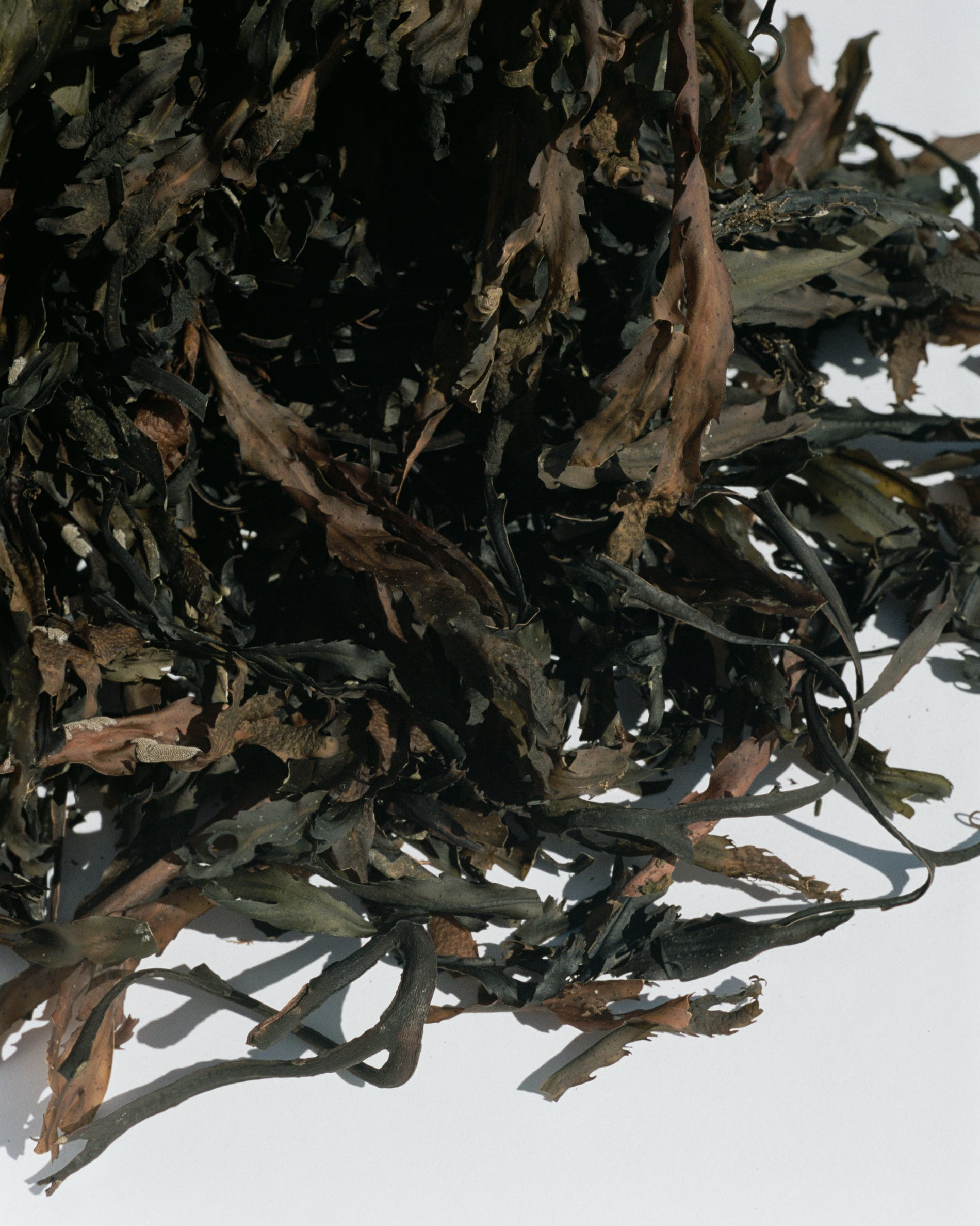 Spa bath seaweed